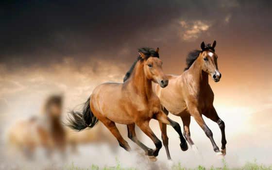 лошади, лошадей, лошадь