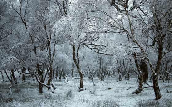 frozen, trees, winter, природа, красивые, лес,