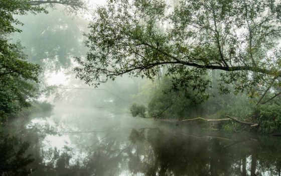 туман, рассвет, река, reki, утро, берегу, trees, природа,