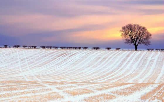 поле, winter, небо, снег, краски, oblaka, tapety, pole, дерево, zimowe, иней,