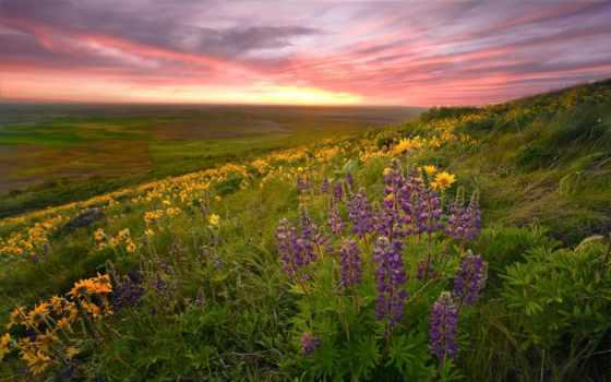 природа, обоях, trees, красивые, дорога, добавлено, trail, самые, cvety, oblaka, красавица,
