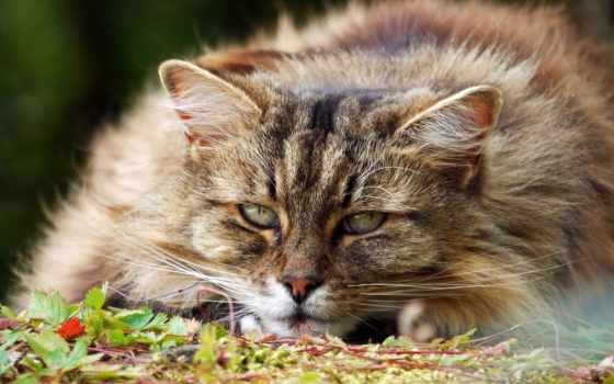kedi, кот, глаза, eyes, пушистый, мар, свет, arnusha,
