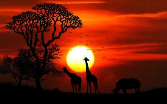 art, стена, жираф, you, great, liven, walls,