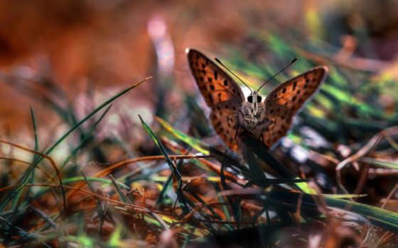 бабочка, макро
