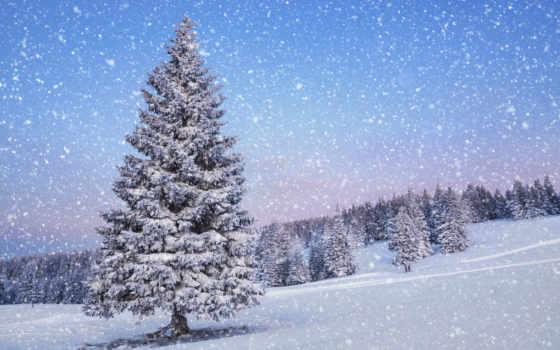 природа, снег, winter Фон № 53073 разрешение 1920x1200