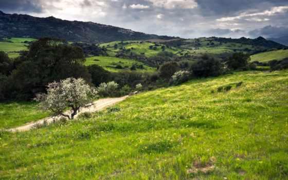 холмы, муреа, зеленые
