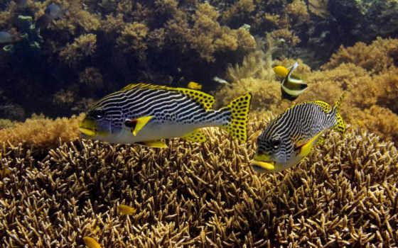 desire, zhivotnye, море, рыбы, underwater, февр,