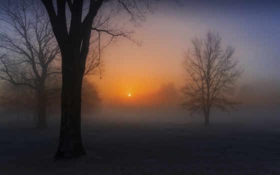 , туман, деревья, солнце, небо,