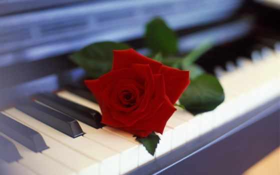 музыка, душі, музыку