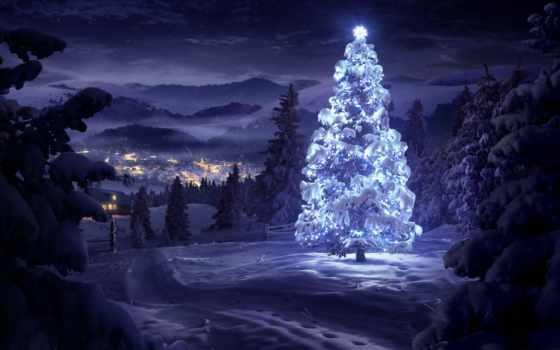 дерево, лесу, рождественская