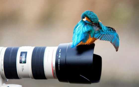 фотоаппарат, kingfisher, объектив, животные, красивый, free, птица,