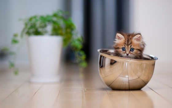 котенок, мире, котята