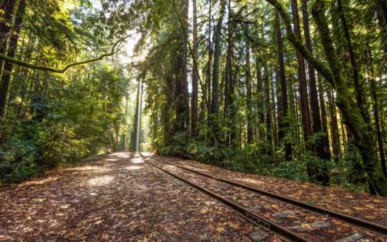 railroad, tracks, лес, поезд, free, trees, природа, world, landscape,