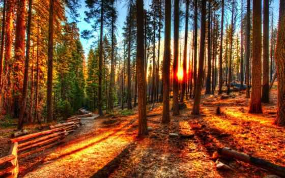 лес, закат, природа, широкоформатные, лесу, сказочный, фотографий, красивые,