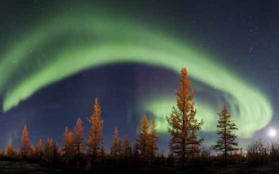 , северное, сияние, лес, ночь,