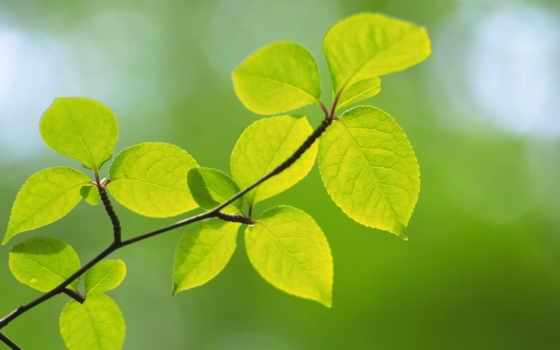 world, зелёная, листва, сочная, всем, home,