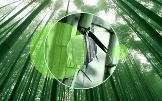 бамбук, лес, япония, zen, polyscape, скалы, art,