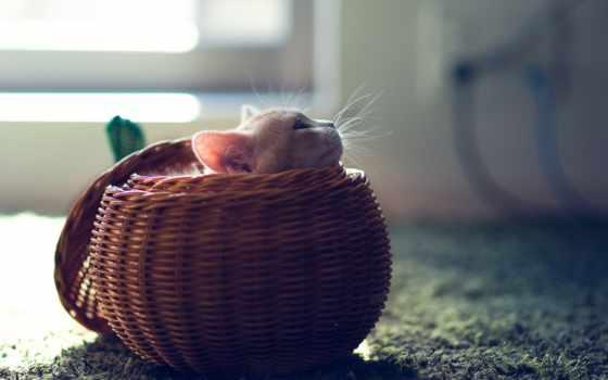 корзина, cute, котенок