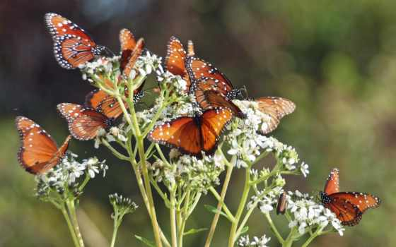 zdjęcie, браун, strona, zwierzętach, świata, бабочка, stronie, znajdziesz,
