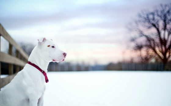 собака, снег, телефон