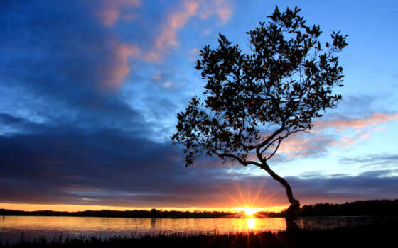 дерево, закат, sun, landscape, фон, облако, rising, нота