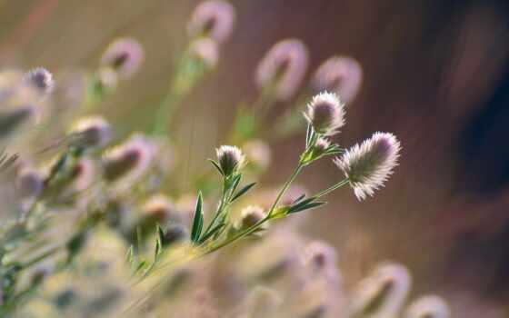 заставка, айфон, цветы, makryi, high, sun, гора, природа, озеро, трава