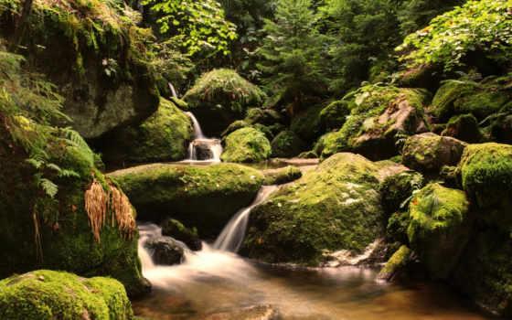 ручей, black, wurttemberg, мох, forest, шварцвальд, камни, baden,