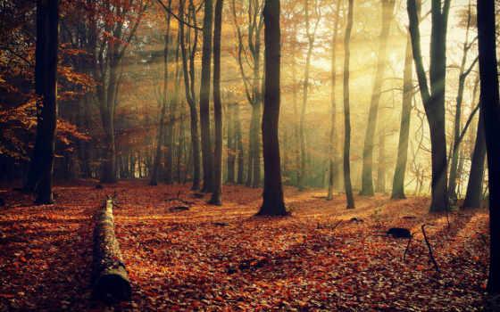 деревья, листва
