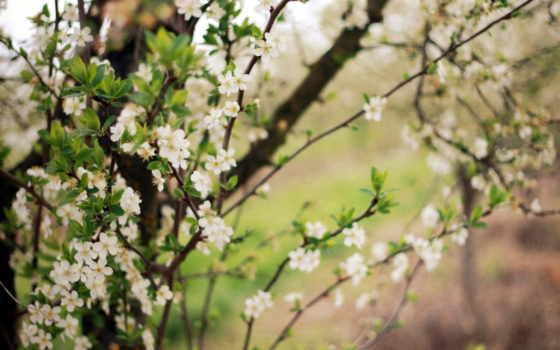 весна, цветение, просмотреть