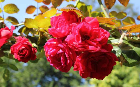 цветы, mine, нов