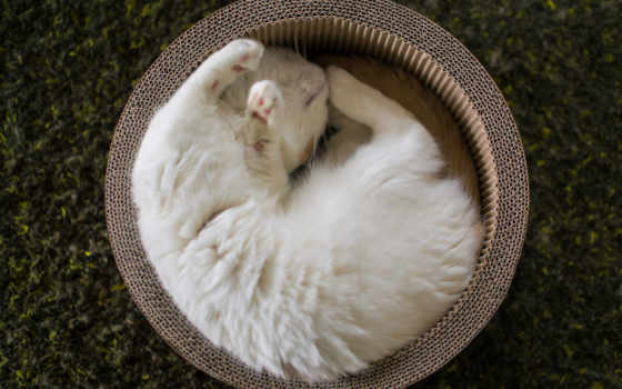 torode, zhivotnye, спит