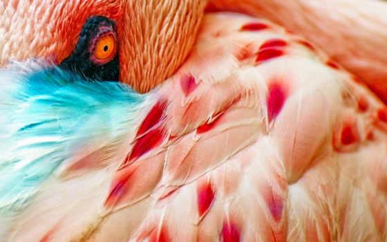 фламинго, птицы, птица,
