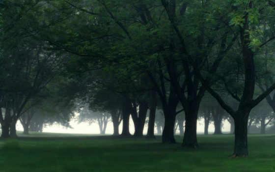 дерево, trees, уход, ottawa, aesthetic, pinterest, more, лес, об,