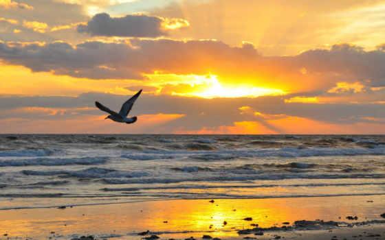 мар, gaviotas, дневник, del, puesta, сол, playa, sobre, aves,