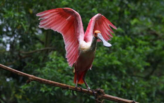 aves, exóticas, papéis
