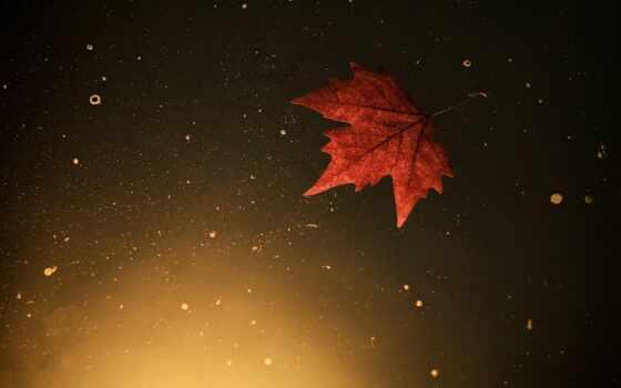 automne, fond, ecran, осень, лист, страница, pour, широкоформатные,
