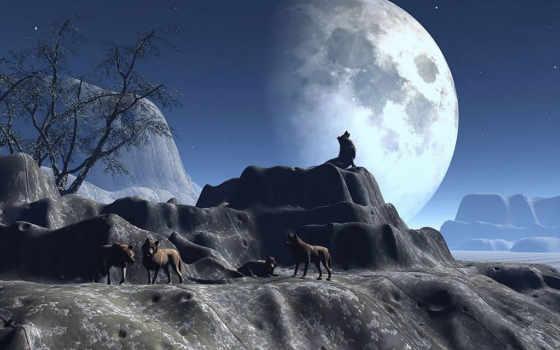волков, волки, овцы, стаи, разделе,