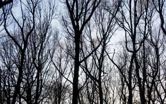 fore, дерево, branch, фото, stocksnap, осень, wood, іо