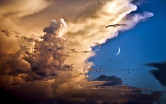 птицы, небо, летят, fone, птиц,