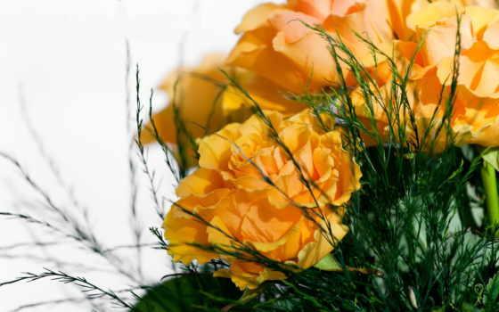 разных, розы
