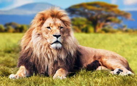 león, del, pintura, sobre, información, los, más, animales,