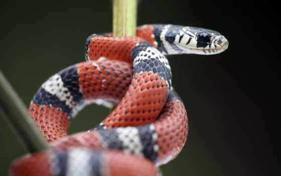 змеи, загружено, snake, прохождение, коллекция, уже, лучшая, ladinatour, широкоформатные, природа,