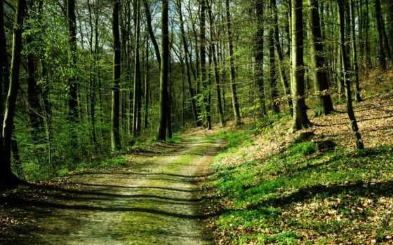 pinterest, лес, природа, trees, дорога, settings, медитация,