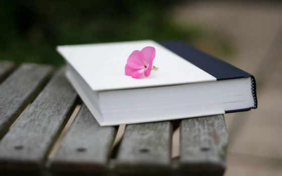 книга, лежит, цветы, лавочке, розовый, cvety, которой, разных, забытая,