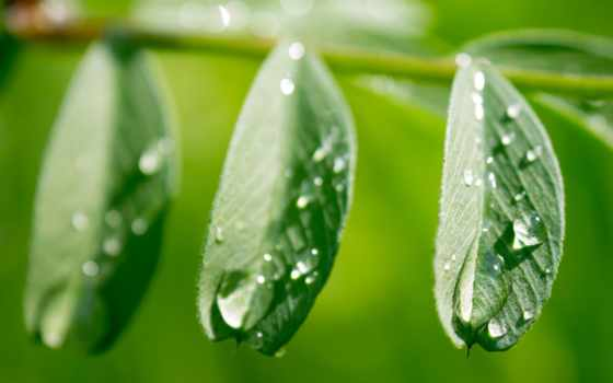 photography, макро, зелёный, wet,