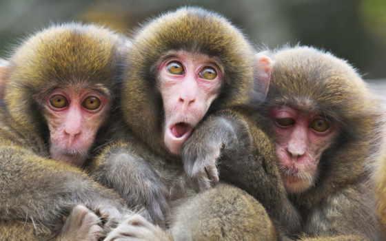 обезьяна, animal, ну, yes