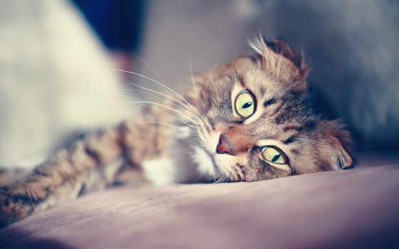 кошки, кот, красивые