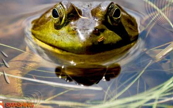 frogs, amphibians, water