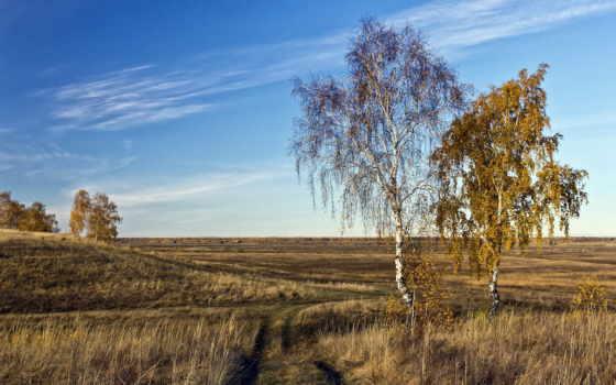 поле, осень, дорога