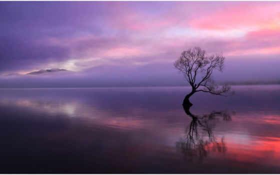 дерево, закат, сухое